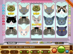 Cats pokieslots77.com Wirex Games 1/5